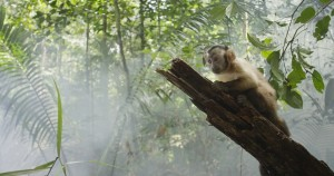 The capuchin monkey and the rain forest, the stars of Amazonia (Toronto International Film Festival)